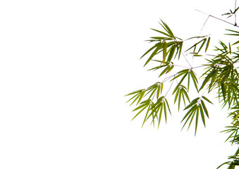 Green bamboo with white background