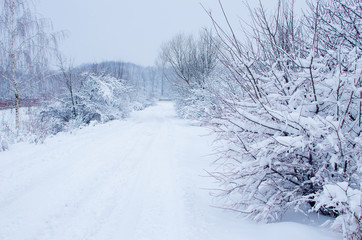 Landscape of winter nature with trees
