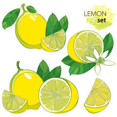 Vector set with outline half and whole fruit, slice, leaf and Lemon flower isolated on white background. Composition with tropical yellow citrus Lemon in contour style for exotic summer design.