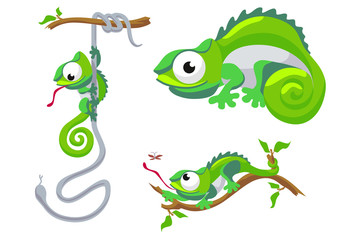 Vector illustration of chameleon isolated on white background