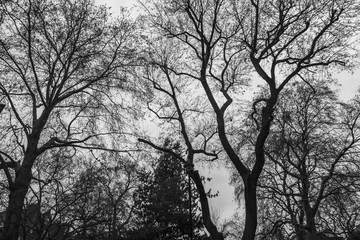 Bare trees in black and white with sky as background, London, United Kingdom