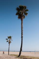 Los Angeles, Venice