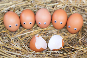 five brown eggs with eyes in the nest look at the broken egg