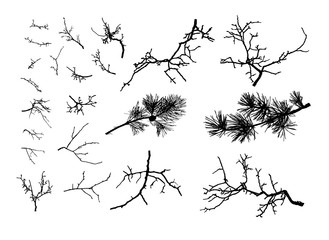 Realistic set of tree branches  (Vector illustration).