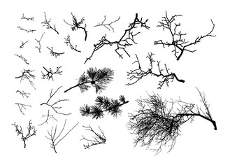 set of tree branches  (Vector illustration).