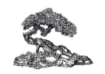 Лиственный бонсай .Deciduous bonsai.