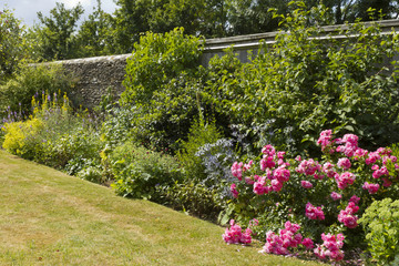 A colourful summer garden border