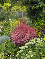 Colouful summer garden border in a walled garden