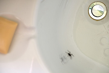 Spider trapped in an empty white bath