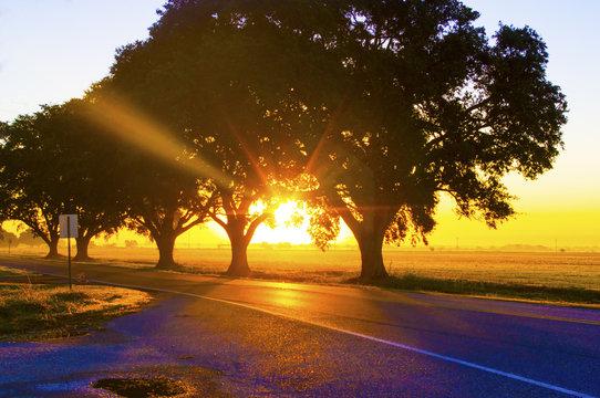 Louisiana Sunrise