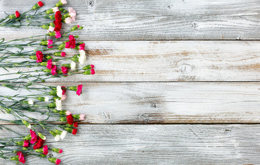 Colorful carnation flowers forming left border on white weathered wooden boards