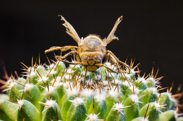 Macro picture of a queen bee