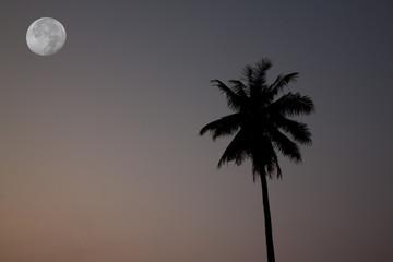 Black coconut tree under full moon on morning.