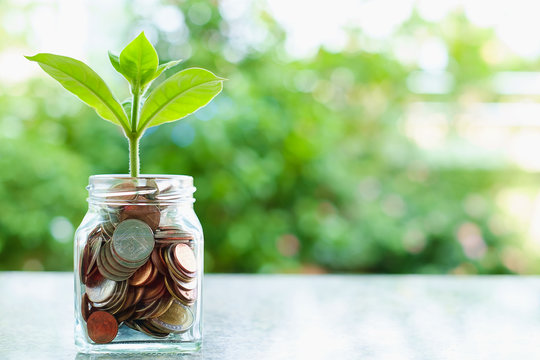 Green tree growing from coins in the glass jar on blurred green natural background with copy space for business and finance concept