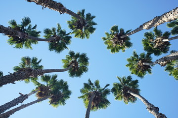 Looking up the palm tree