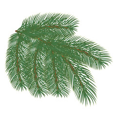 tree branches with pine cones