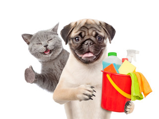 Cleaning concept. Kitten and Puppy holds bucket with washing fluids and rags in paws and showing thumbs up. isolated on white background