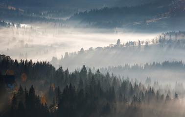 Keuken foto achterwand Bos in mist First sunrise rays of sun in Carpathian mountains.