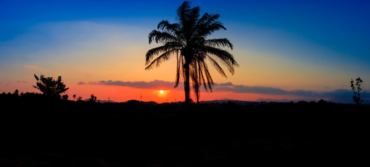 panorama view silhouette coconut tree in sunset on sky beautiful colorful landscape and city countryside twilight time art of nature
