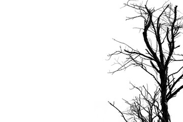 Silhouette dead tree isolated on white background for scary or death with copy space for text. For hopeless, despair and peaceful concept.