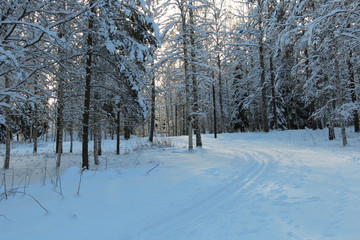 Ski track in Swedish forest