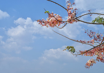 tree, spring, sky, blossom, branch, flower, nature, blue, pink, cherry, flowers, blooming, red, bloom, autumn, plant, leaves, leaf, white, season, sakura, winter, natural, branches, beauty