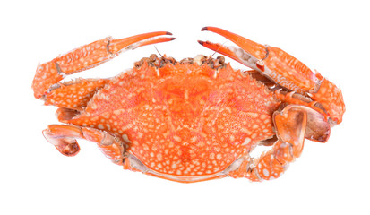 Top of steamed blue crab isolated on white background
