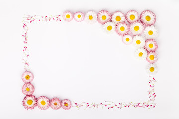 frame made of garden daisy flowers isolated on white background with copy space for your text. flat lay, top view. beauty, wedding, Mothers day or Womens day composition