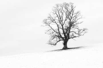 Single tree in a snow white English landscape