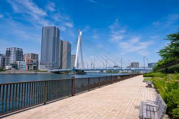 東京 隅田川沿いの遊歩道