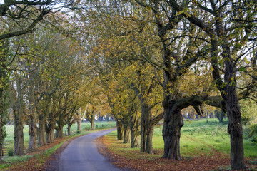 Autumn colours on an avenue of trees by a country lane near Chavenage, Gloucestershire, UK