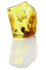 Baltic amber with spider isolated on white background