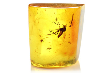 Baltic amber with long-tailed dance fly isolated on white background