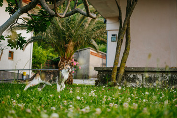The street cat is crouching, hunting in the gurden. Mediterranean nature. At the background - the walls of houses, palm trees, flowers, trees.