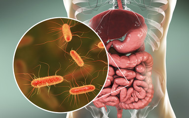 Intestinal microbiome, 3D illustration showing anatomy of human digestive system and enteric bacteria Escherichia coli, E. coli, colonizing jejunum, ileum, other parts of intestine. Gut normal flora Wall mural