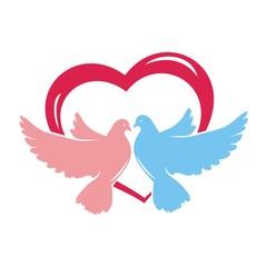 голуби и любовь