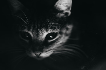 Portrait of a young kitty close up in night
