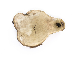 cross section of the tree,white isolated background