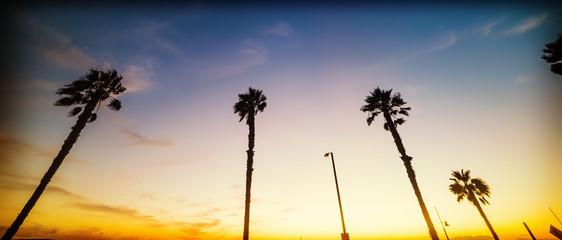 Palm trees in Santa Monica beach at sunset