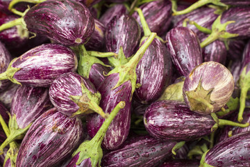 Stack of purple eggplant - Solanum melongena