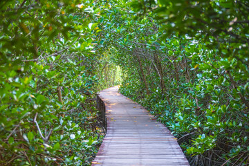 A beautiful scenery of the wooden bridge for nature trail mangrove forest at Petchaburi province, Thailand. (intend focus at middleground subject and making foregroung and background blurred)