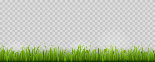 Green Grass Border. Isolated. Vector Illustration.