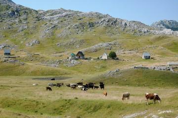 Village In Lukavica Plateau, Montenegro