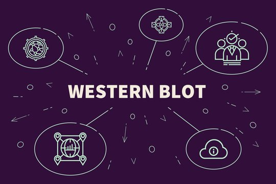 Conceptual business illustration with the words western blot