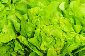 Green lettuce on shop shelf