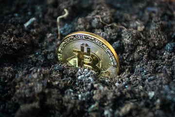 Symbolic golden coin of bitcoin growing in soil