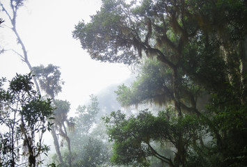 Dense clouds fill the cloud forest of Chirripo National Park, Costa Rica.