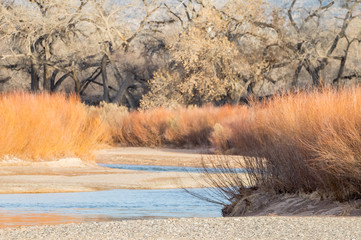 Rio Grande River in winter, north of Albuquerque, New Mexico, with coyote willows and cottonwood trees