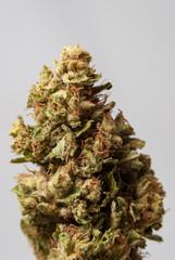 Cannabis Nug - Strain: Sour Diesel