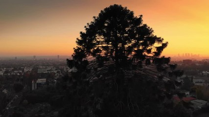 Fotobehang - Aerial view of pine tree silhouette, sunset sun peaking over Hollywood Hills, revealing city of Los Angeles cityscape skyline in background. 4K UHD.